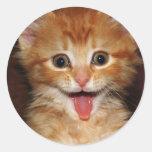 gatito del melocotón etiquetas