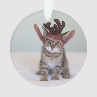 Gatito del navidad