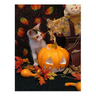 Gatito del otoño - Halloween/acción de gracias Tarjeta Postal