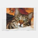 Gatito del tigre toalla de cocina