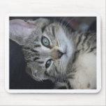 ¡Gatito demasiado lindo! Alfombrillas De Ratón