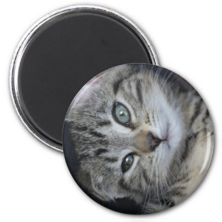 ¡Gatito demasiado lindo! Imán Redondo 5 Cm