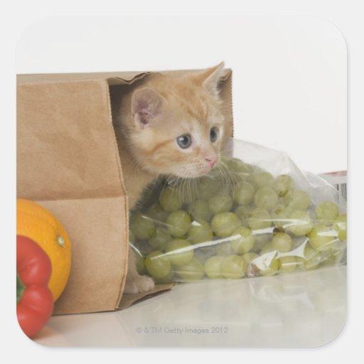 Gatito dentro del bolso de ultramarinos colcomanias cuadradas
