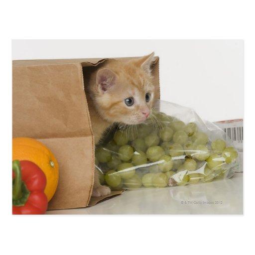 Gatito dentro del bolso de ultramarinos postales