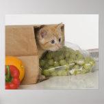 Gatito dentro del bolso de ultramarinos poster