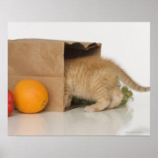 Gatito dentro del bolso de ultramarinos póster
