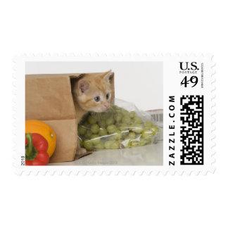 Gatito dentro del bolso de ultramarinos sellos