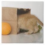 Gatito dentro del bolso de ultramarinos teja