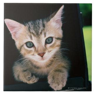 Gatito dentro del buzón azulejo cuadrado grande