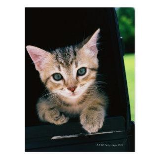 Gatito dentro del buzón postales
