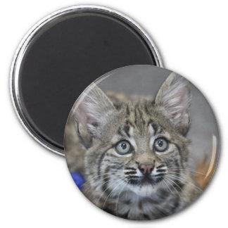 Gatito disimulado imán redondo 5 cm