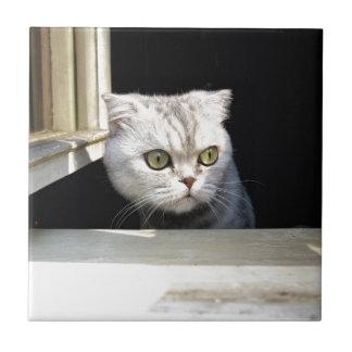 Gatito divertido azulejo cuadrado pequeño