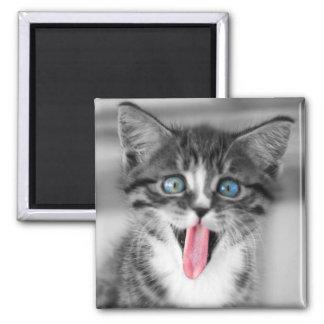 Gatito divertido con la lengua que cuelga hacia imán cuadrado