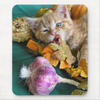Gatito divertido del gato del gatito que juega las mouse pad
