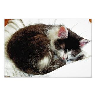 Gatito dormido en el consolador blanco fotografía