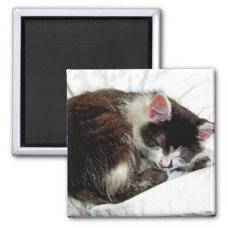 Gatito dormido en el consolador blanco imán cuadrado