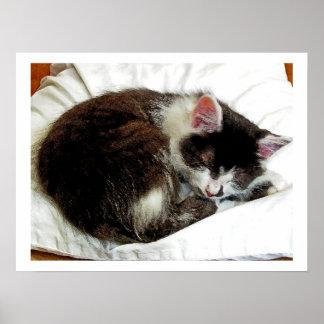 Gatito dormido en el consolador blanco póster