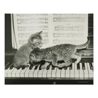 Gatito dos que juega en el teclado de piano, (B&W) Póster