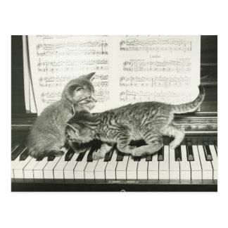 Gatito dos que juega en el teclado de piano, (B&W) Postal