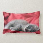 gatito dulce almohada
