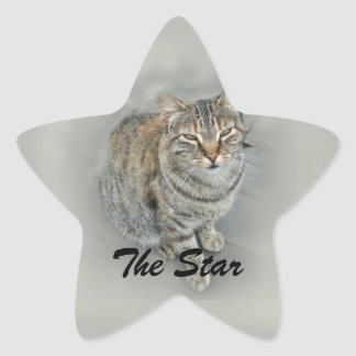 (Gatito dulce Pegatina En Forma De Estrella