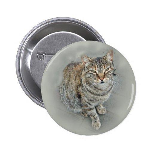 (Gatito dulce Pins