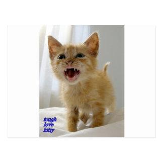 gatito duro del amor postal