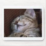 Gatito el dormir alfombrilla de ratón