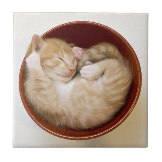 Gatito el dormir en cuenco rojo simple en blanco tejas