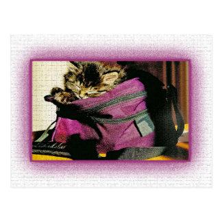 Gatito el dormir en un monedero de Borgoña Postal
