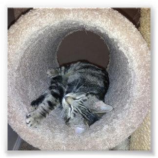 Gatito el dormir impresiones fotograficas