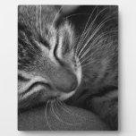 Gatito el dormir placa de madera