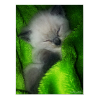 Gatito el dormir póster
