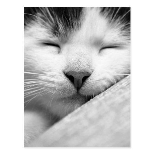Gatito el dormir tarjetas postales