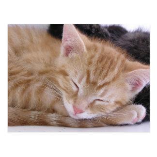 Gatito el dormir postal