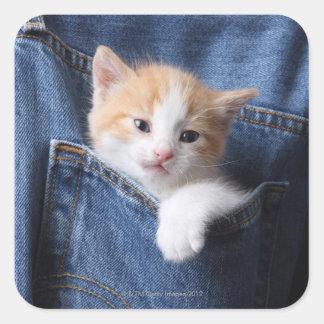 gatito en bolso de los vaqueros pegatina cuadrada