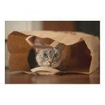 Gatito en bolso de ultramarinos impresión en madera