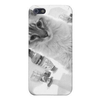 gatito en caso del teléfono del fregadero iPhone 5 carcasa