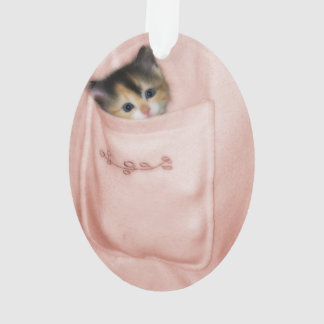Gatito en el bolsillo 2