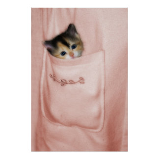 Gatito en el bolsillo 2 póster