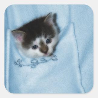 Gatito en el bolsillo pegatina cuadrada