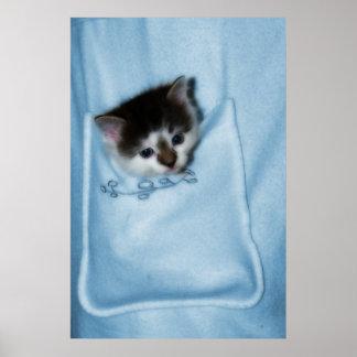Gatito en el bolsillo póster