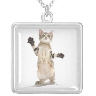Gatito en el fondo blanco joyerias personalizadas