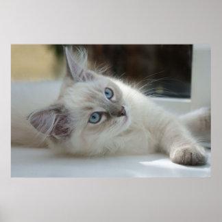 gatito en el poster del travesaño de la ventana