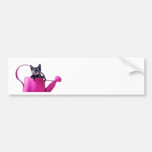 Gatito en el riego rosado etiqueta de parachoque
