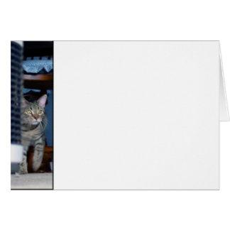 Gatito en el vagabundeo tarjeta de felicitación