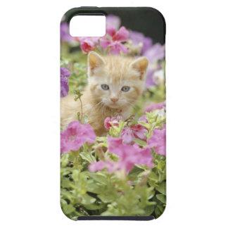 Gatito en flores funda para iPhone SE/5/5s