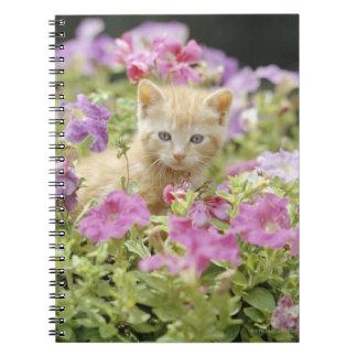 Gatito en flores libros de apuntes
