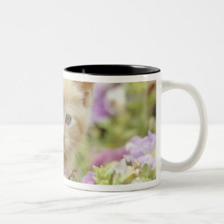 Gatito en flores taza de café