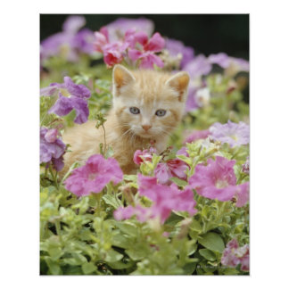 Gatito en flores poster